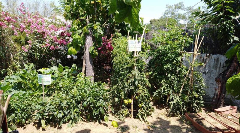 L'hort de la Residència per a Gent Gran Montseny, a El Masnou